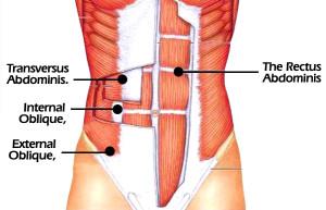 core-muscles-3.jpg